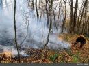 ✅  یک مدیر مسوول خبرداد: جنگل ابر برای دومین بار در این هفته آتش گرفت/ آتشسوزی از شب گذشته آغاز و هنوز مهار نشده است
